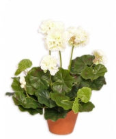 Witte namaak geranium in pot 30 cm