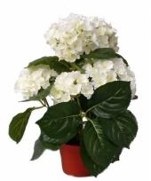 Witte namaak hortensia in pot 36 cm