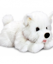 Witte terrier puppy 35 cm