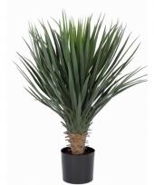 Yucca rostrata in pot 80 cm